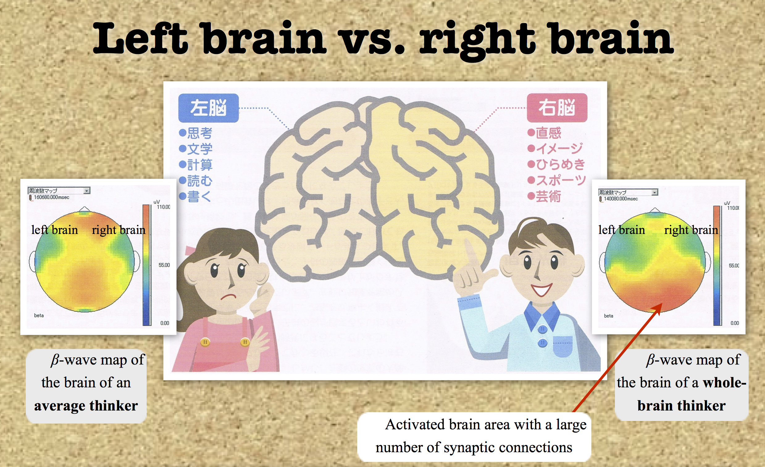 left brain vs right brain